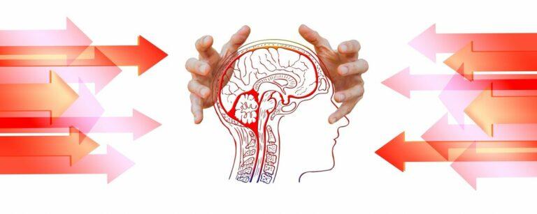 Hoe werken stresshormonen? – Een schematisch overzicht