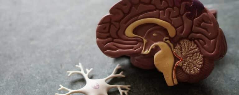 Wat is endorfine? En wat doet stress met endorfine?