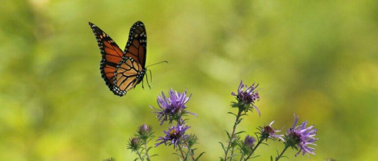 Het Butterfly Effect – Hoe kan het helpen bij stress en burn-out?