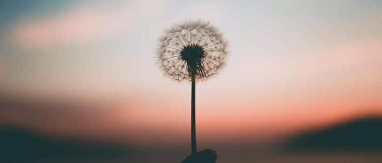 Het nut van mindfulness bij stress en burn-out